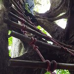 Climbing the hollow fig tree.