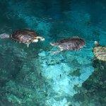 swimming around the cenote