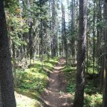 many forest trails