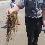 Not trash, this is called whip coral and helps build the dunes.