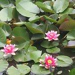 Detalles del jardín del Restaurante Los Arándanos....viendo estas maravillas, te imaginas cómo s