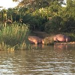Photo of Shoreline Hippo and Croc Cruises