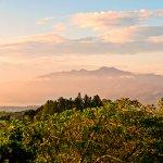 Foto de Finca Rosa Blanca Coffee Plantation & Inn