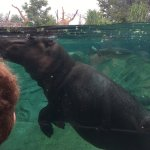 Photo de ZooParc de Beauval