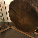 Tree Section in Museum Sugarlands Visitors Center