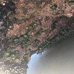 Photo de Yachats coastline