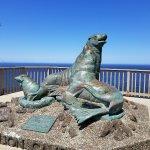 Love the sea lions