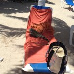 Reserved beach chairs