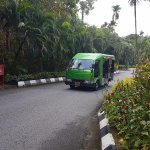 A greeny -Transport around the resort
