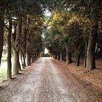 Photo de Locanda del Galluzzo