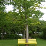 Tree in the bench
