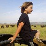 Mirando los elefantes