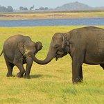 Elefante con cría