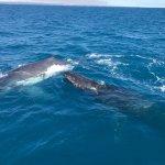 Freedom Whale Watch Foto
