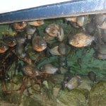 quanti pesci nell'acquario
