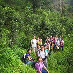 Xishuangbanna - Puer old tea tree forest forest trekking