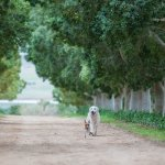 Pet friendly and beautiful places to run the dogs
