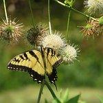 Photo de Bowman's Hill Wildflower Preserve