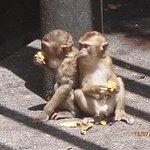 Photo de Monkey Hill