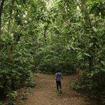 mini forest area