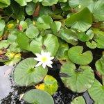 Фотография Thai Orchid - Maidenhead