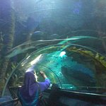 Photo of Aquaria KLCC