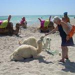 bébés chameau sur la plage