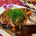 Barumundi Fish