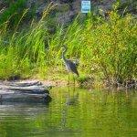 Foto de Tubing Platte River