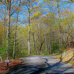 Our 14 wooded acres in Springtime