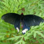 Kuang Si Falls Butterfly Park Foto