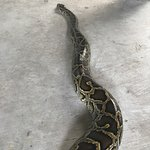 Photo of Samui Snake Farm
