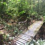 Paku Falls trail, Mulu