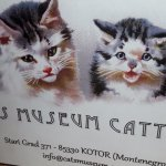 Photo of Cats Museum