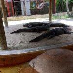 Photo of Everglades Holiday Park