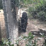 Foto di Parco Zoo Punta Verde