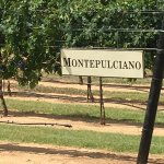 Grape Creek Vineyards Fredericksburg