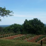 Kitchen garden at Monticello with view