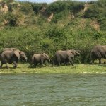 elephants from the boat