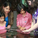 MaST Center Aquarium Touch Tank
