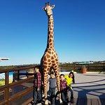 Zoologico de Nuevo Laredo