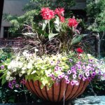 Beautiful flower baskets all around the resort grounds and walking paths.. so Beautiful.
