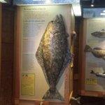 Exhibit detailing the halibut.