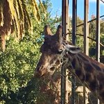 Giraffe cafe gives you a lovely view and you can hear from the keeper each day.
