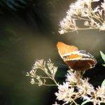 Beautiful orange butterfly