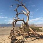 Mesquite Flat Sand Dunes Foto