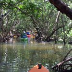Kayaking through the mangroves. Nice shaded tour.