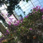 Inside one of the large greenhouses <3, flowers from the roof