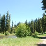 Slough Creek picnic area (highly recommend - we were the ONLY people here!!)
