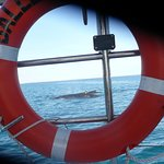 The whales come very close to the boat and seem to enjoy themselves